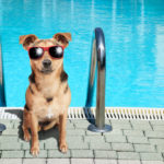 Pool Safety Tips for Your Pets
